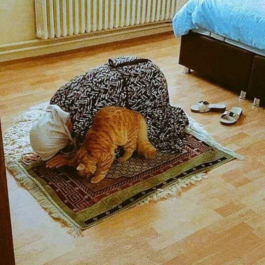 Subhanallah... Seekor Kucing Ikut Bersujud Bersama Nenek Di Atas Sajadah