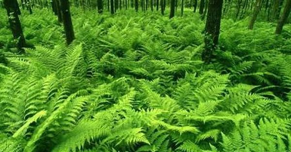 Image result for high resolution tropical forest | VaporIz | Pinterest