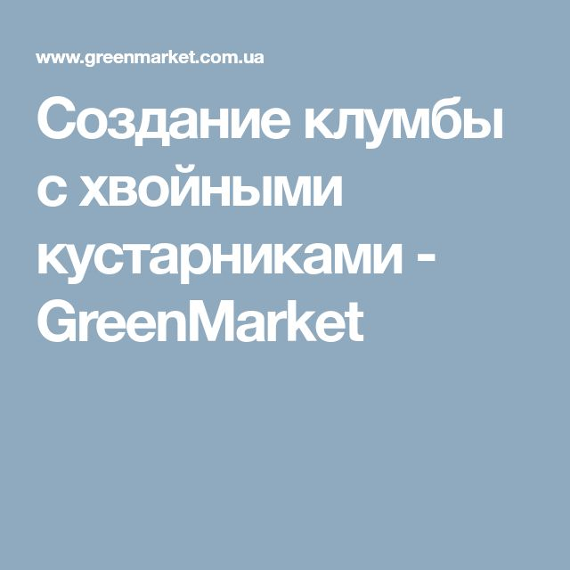 Создание клумбы с хвойными кустарниками - GreenMarket