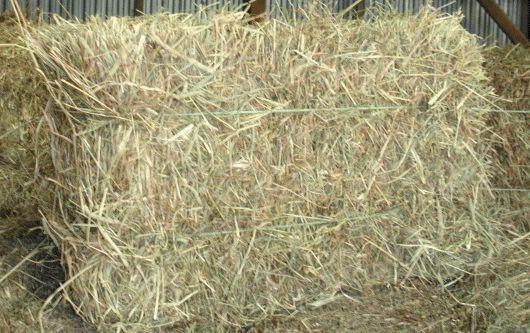 hay-bale.gif 530×333 pixels