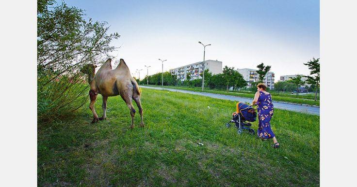 """Gdańsk. """"W Polsce na ulicach można spotkać białe niedźwiedzie"""" – to jedna z najszerzej rozpowszechnionych niedorzeczności na temat kraju nad Wisłą. Czasy globalnego ocieplenia będą wymagać uaktualnienia stereotypu., fot. Georg van der Weyden"""