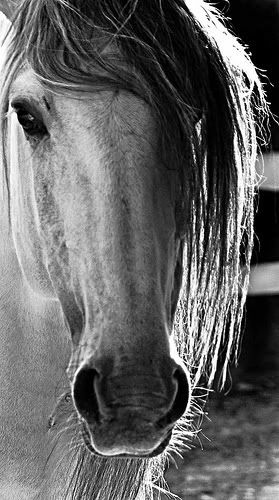 2245699146_40b196b412.jpg picture by Amazing horse Pictures - Photobucket Groups