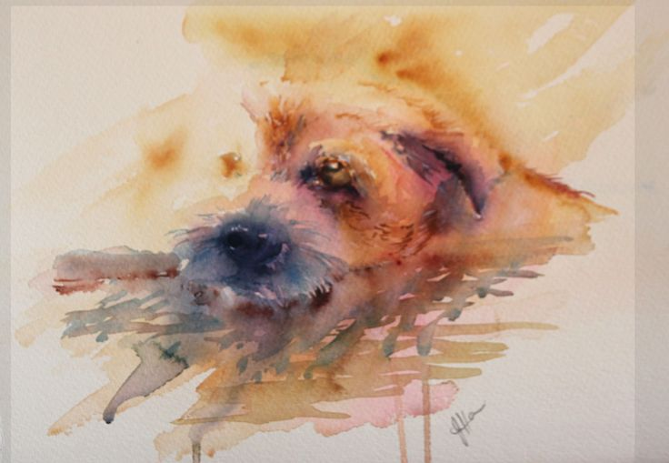 """""""Fed Up"""" Border Terrier in watercolour"""