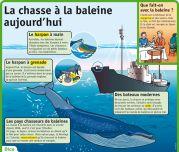 La chasse à la baleine aujourd'hui -  Le Petit Quotidien, le seul site d'information quotidienne pour les 6 - 10 ans !