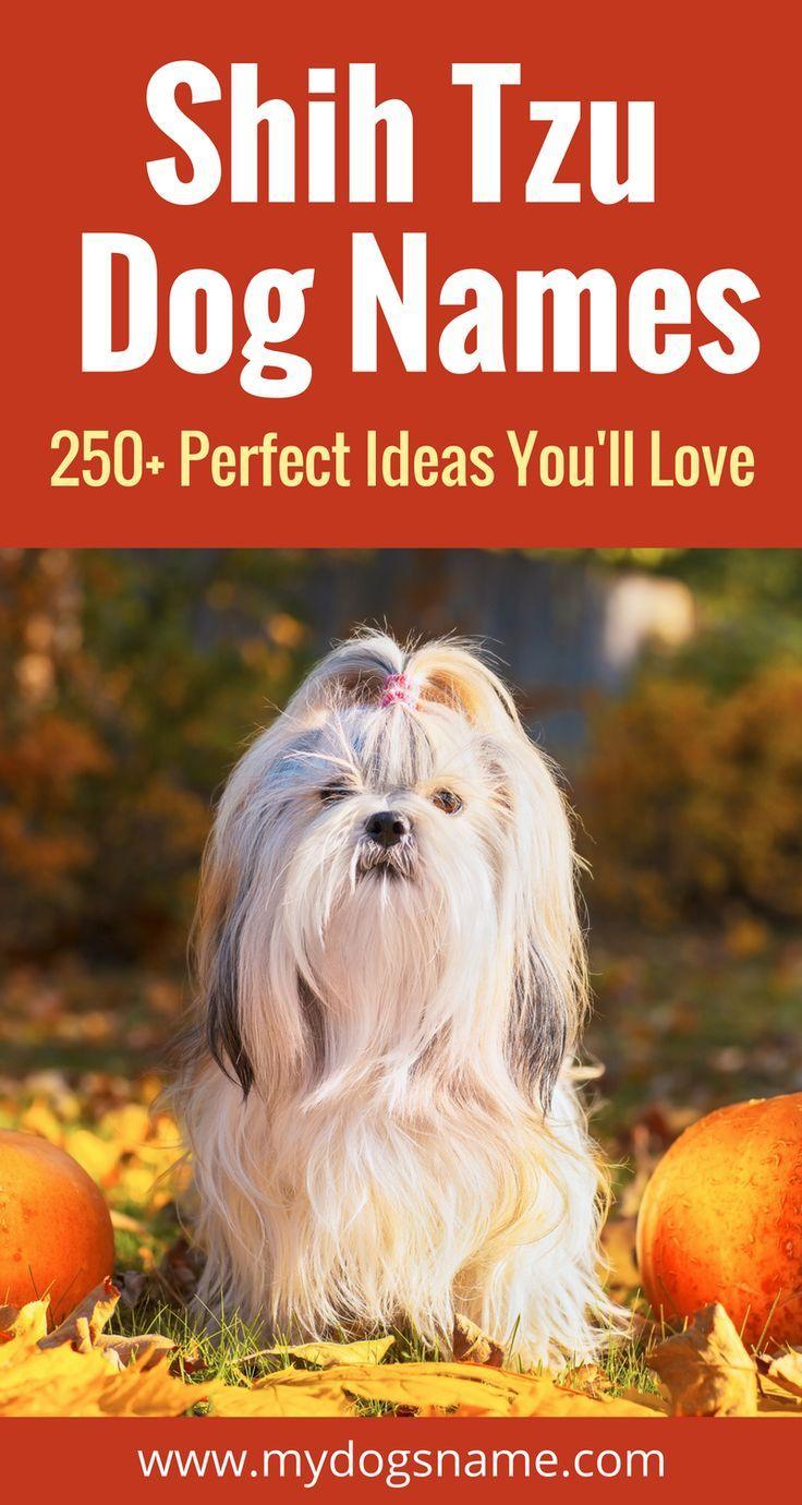 250 Fantastic Shih Tzu Names Dog Names Shih Tzu Dog Cute