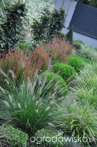 Lawendowy zawrót głowy - strona 1377 - Forum ogrodnicze - Ogrodowisko