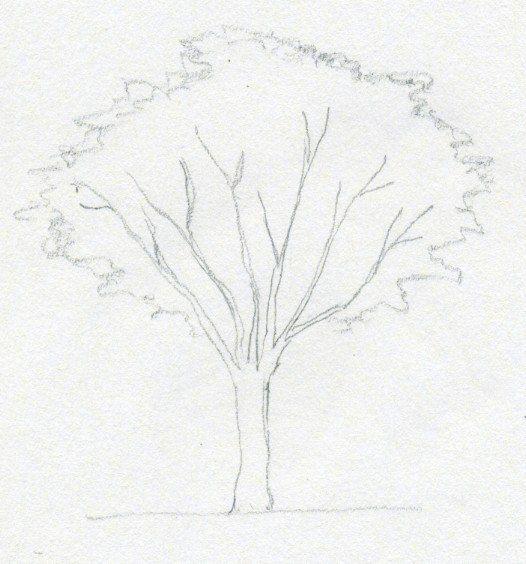 Die Besten 25+ Baum Malen Ideen Auf Pinterest | Baumart