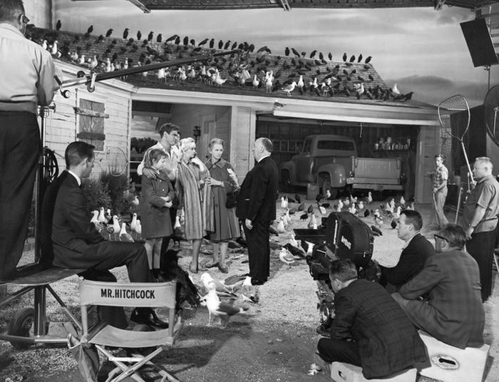 Tournage des Oiseaux, Hitchcok flavorwire.com: behind the scenes, monster movies