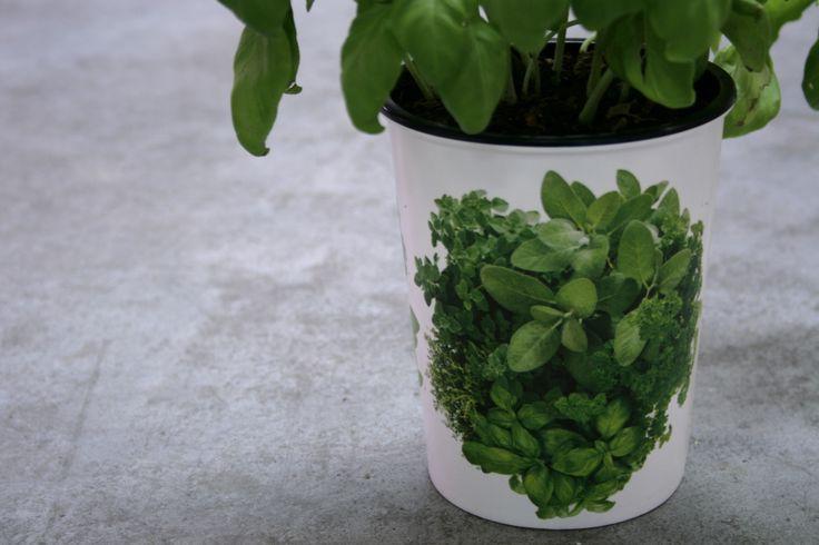 WaterWick Bucket herbs