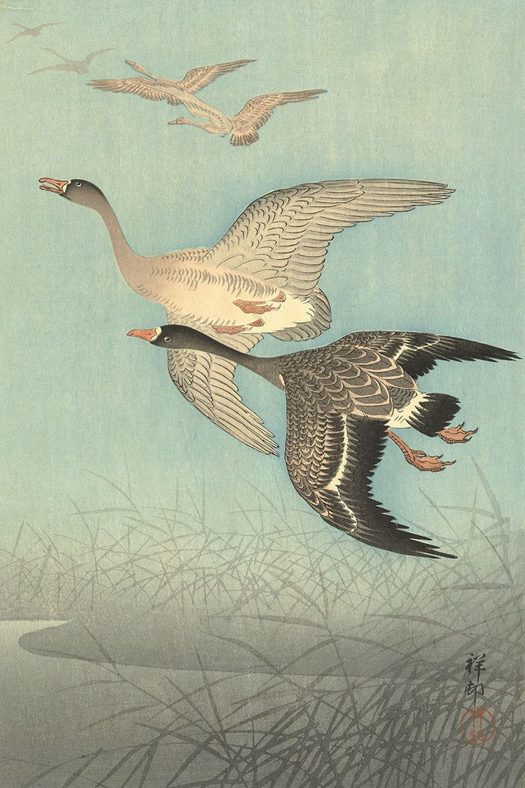 White Fronted Geese in Flight by Watanabe Shozaburo