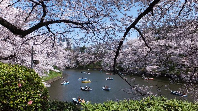 """Chidoriga-Fuchi"" One of the Best Beautiful Sakura Place in Tokyo.  都内で花見ならここ!桜の名所で「千代田のさくらまつり」が開催! | RETRIP"