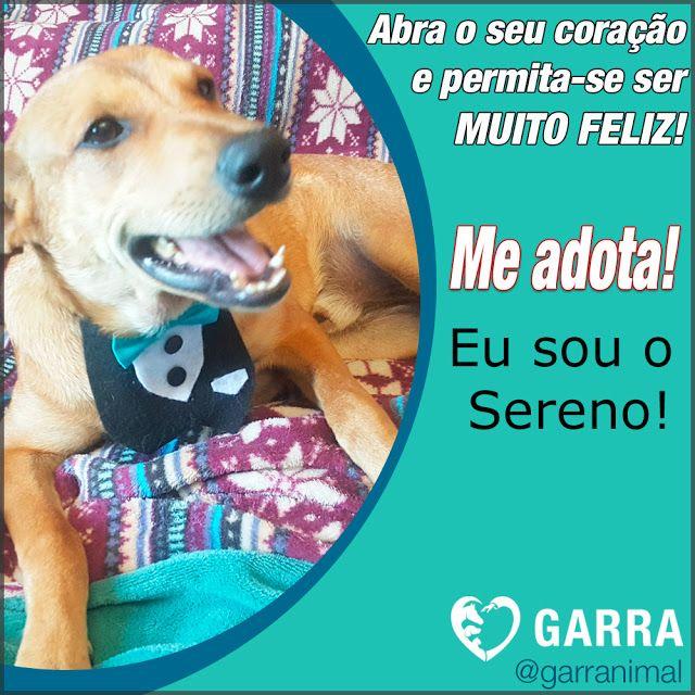 G.A.R.R.A. - Grupo de Ação, Resgate e Reabilitação Animal: Adote o Sereno!