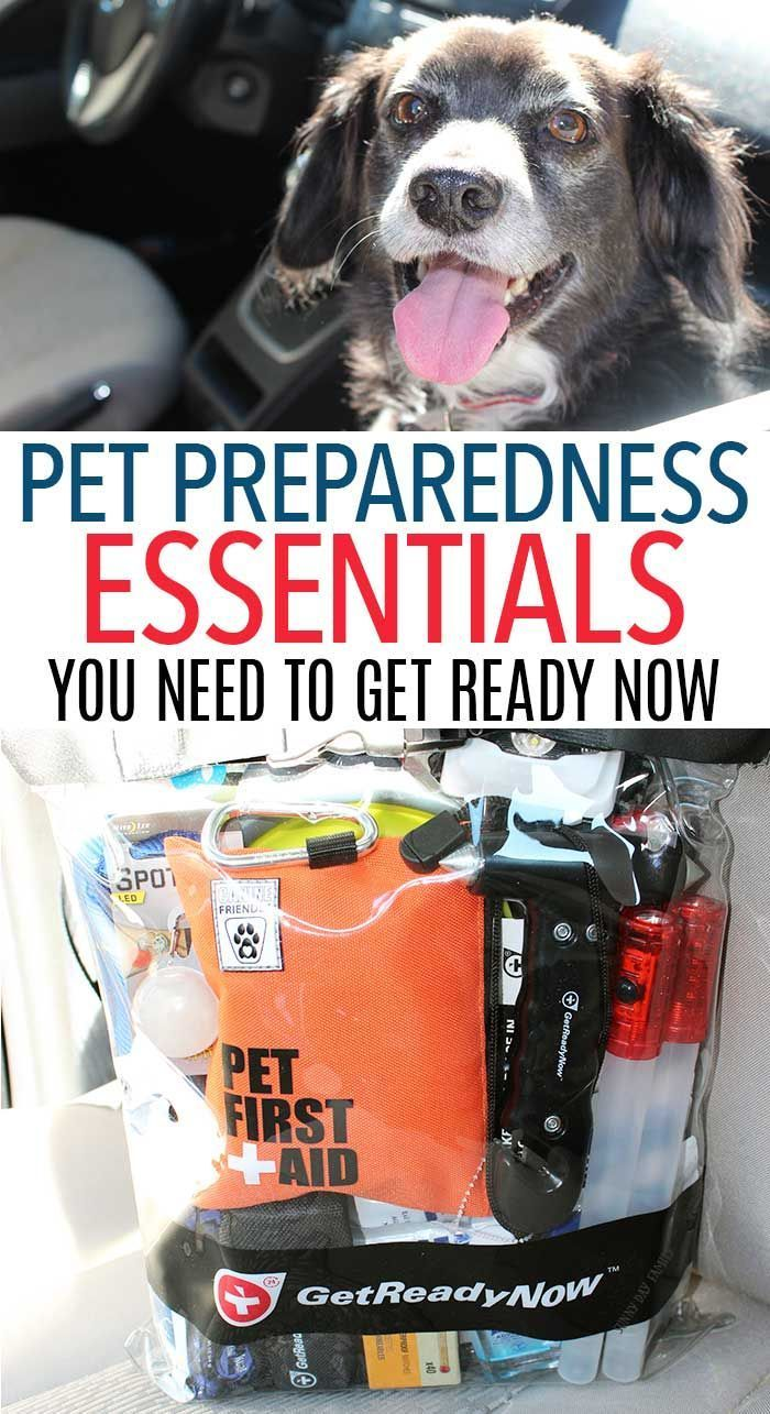 Pet Preparedness Essentials You Need to Be Ready Now