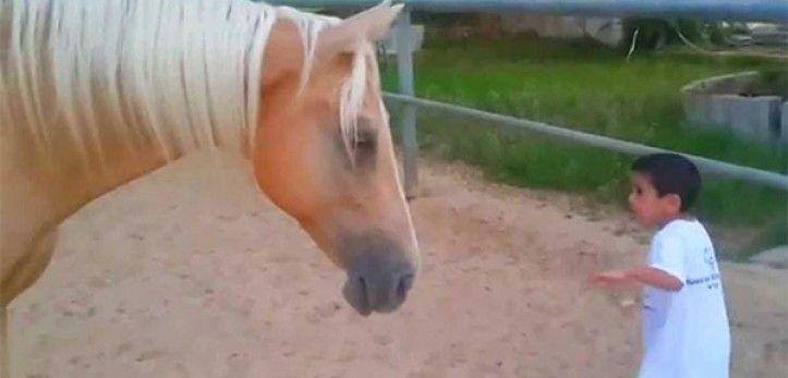 Le garçon se rapproche dangereusement de la jambe du cheval. La mère est effondrée en voyant la vidéo!