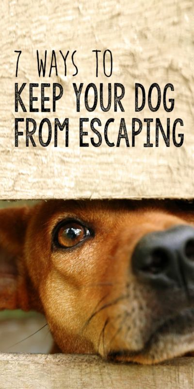 7 ways to keep your dog from escaping the yard shelters pets and the check. Black Bedroom Furniture Sets. Home Design Ideas