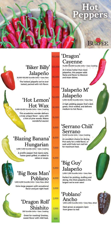 55 best grow peppers images on pinterest - Best romanian pepper cultivars ...