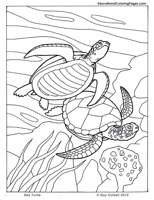 Turtle Kissing Fish Turtle And Fish Coloring Pages