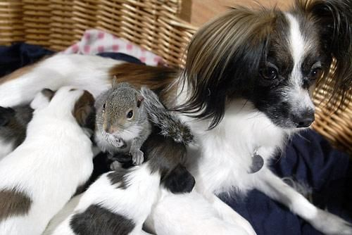 The Mother of All EncoresAnimal Pics, Puppies, Mothers, God, Dogs, Baby Squirrels, Butterflies, Friendship, Families