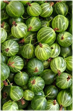 Vickie on Facebook: Gooseberries Force fed them as a child Even looking at them sends me into panic mode.