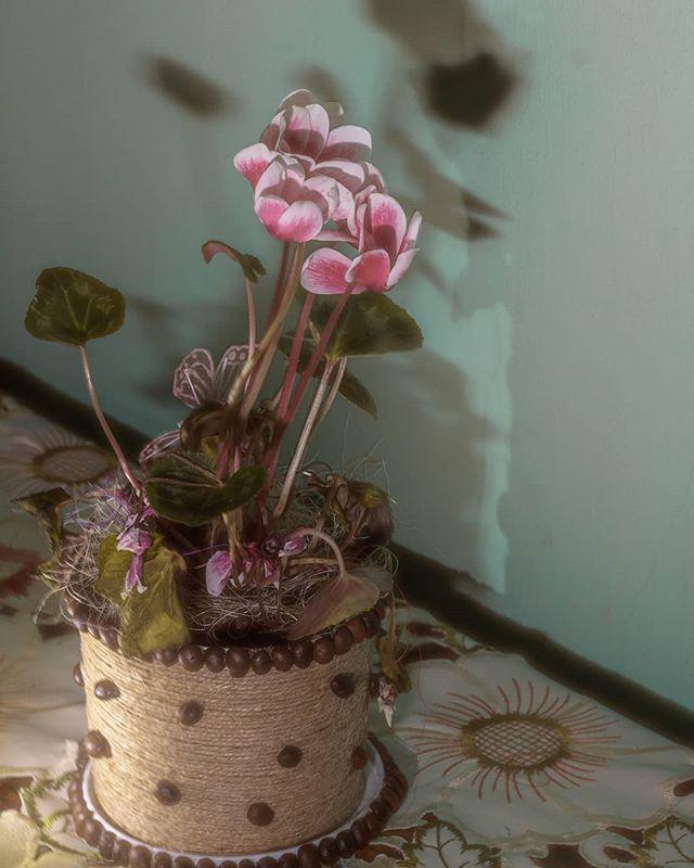 #indoor #flowers #stillife #stillifephotography #stillifephoto #stillifegallery #flowerphotography #pink  #shadow #lights #photography #photo #hapy #colorphotography #color #pink #dslrphotography #dslr #tamronlens #tamron #tamron1750 #romania🇹🇩 #romania
