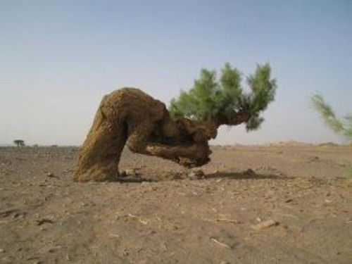tree reaches upward to God | This tree looks like that it is bowing to its God with a heavy load on ...