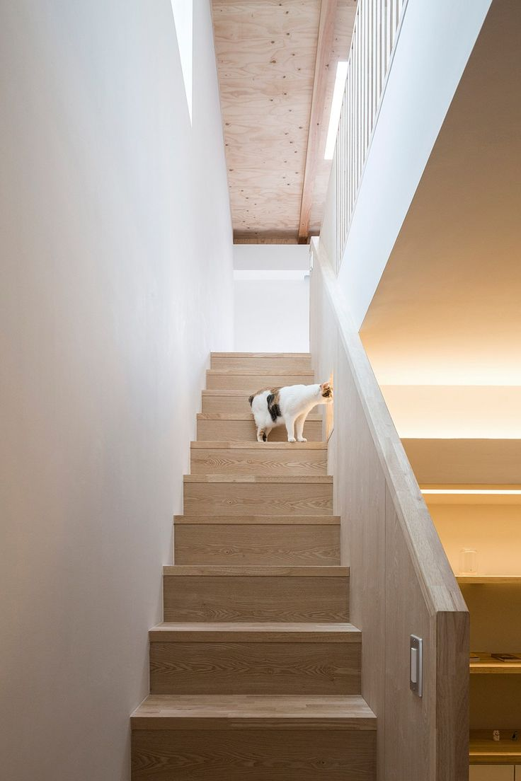 Uncategorized Cat Walkway In House 1114 best interior images on pinterest nonagon style pet friendly homes house is dodo
