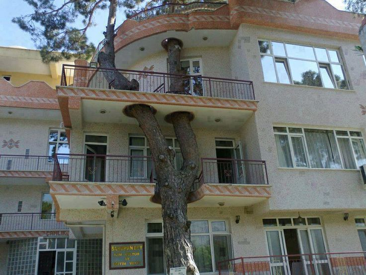 The tree was there first.   See more: http://interestingengineering.com
