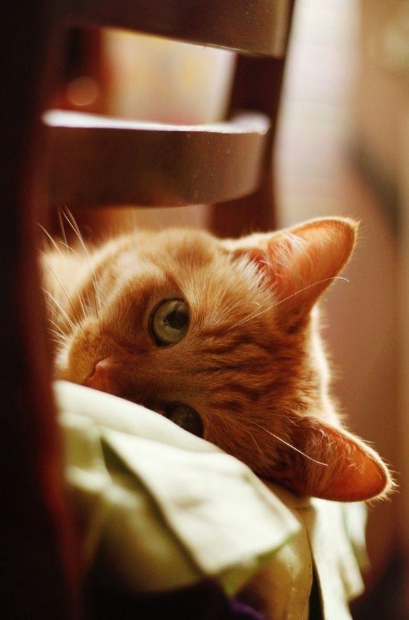 aww! Orange tabby kitty cat animal photography #cats