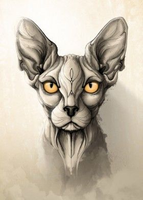 cat cats sphynx animal animals wild nature illustration