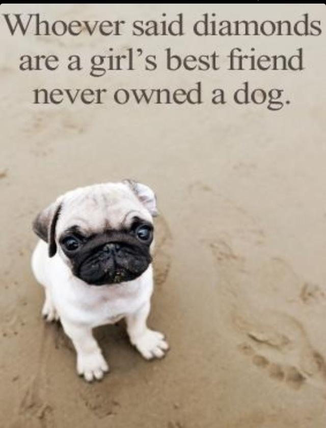 Dog Is My Best Friend