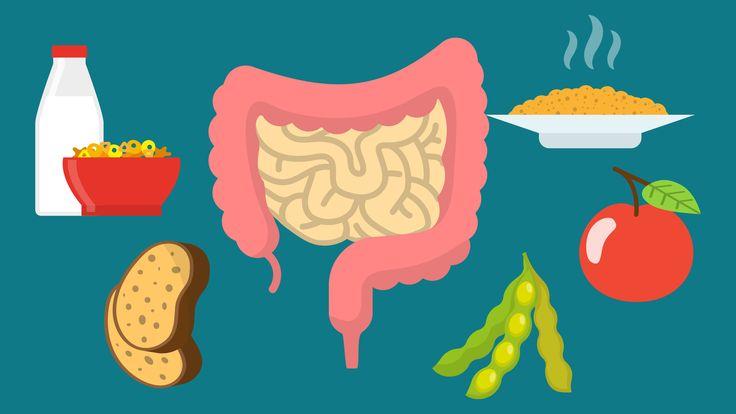 Wat zijn de beste voedingsmiddelen voor gezonde darmen? Hoe kan het dat voeding invloed heeft op de darmen? Over spijsvertering, slecht kauwen en yoghurt.