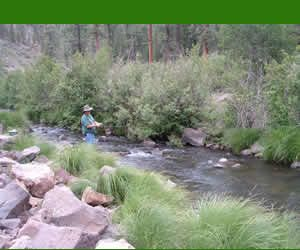 20 best fly fishing images on pinterest fishing fly for Fishing spots in arizona