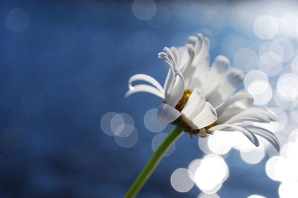 О съемке боке, освещении, и красивых фотографиях