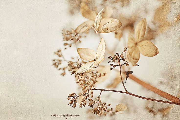 Mona's Picturesque: Endless Elegy Texture Collection {Available Now}