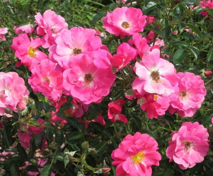 Best Flowers For Raised Flower Beds