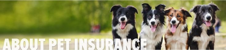 You can rest easy knowing your dogs and puppies are protected with PetFirst pet insurance.