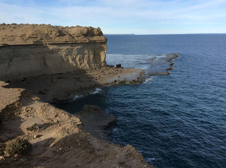 Península de Valdés, provincia del Chubut. Alistamiento de ballena austral y lobos marinos. Patagonia argentina.