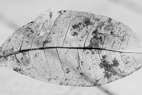 leaf | Studies in transparency