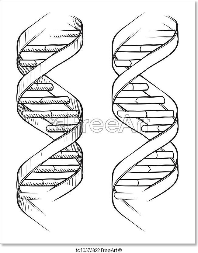 Dna Easy Drawing : drawing, FreeArt, Fa10373822, Drawing,, Tattoo
