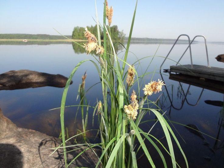 Calme absolu, la Finlande en été.