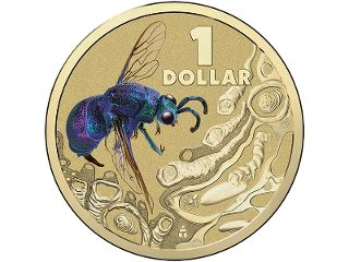 Cuckoo Wasp - Colour printed frosted uncirculated coin. Among the most resplendent insects to be found in Australia, the iridescent green, blue, and purple Cuckoo Wasp is truly befitting to be included in the Royal Australian Mint's Bright Bugs Series. #coincollecting