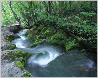흐르는강            흐르는강 (모하비,2014년 SM5 플래티넘,SM5 플래티넘,코란도 투리스모 4W,투리스모 싼곳,쌍용 투리스모 시