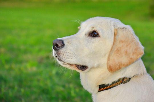 Con sello internacional: razas de perros populares en el mundo - Yahoo Vida y Estilo en Español