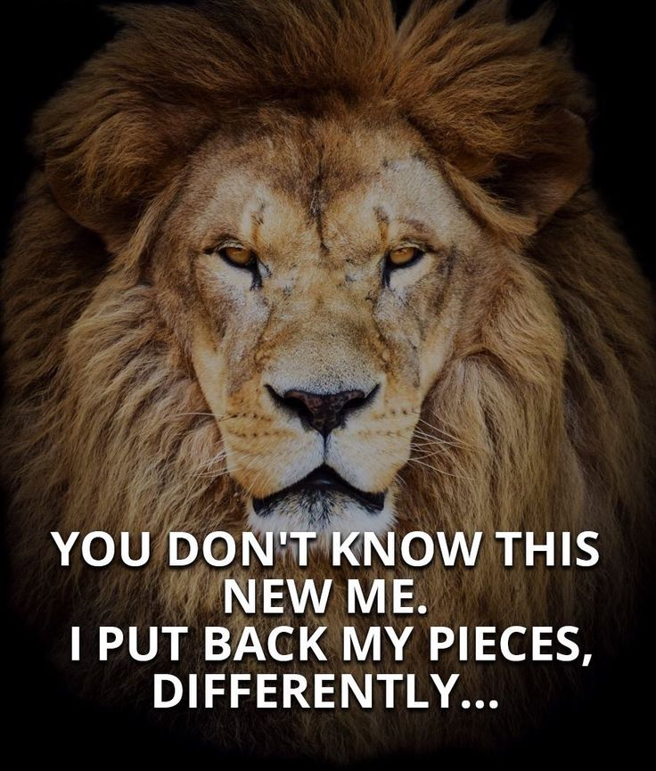 Relationship Lion Lioness Quote