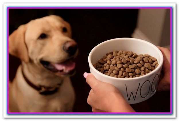 Best Dog Food For Dogs With Allergies And Sensitive Stomachs