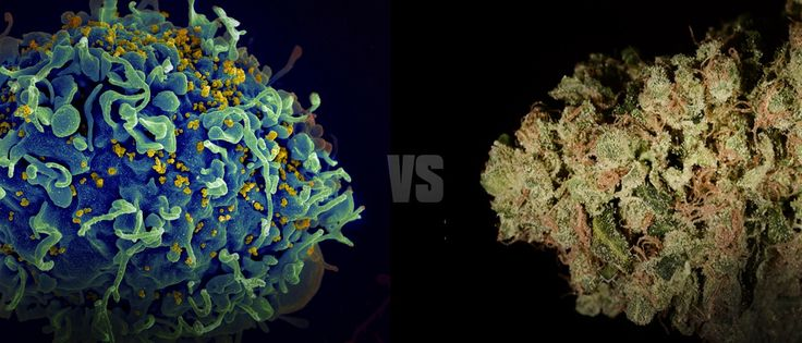 Cannabis Can Effectively Treat A Multitude Of HIV/AIDS Symptoms - #MMJ #HIV #AIDS - https://www.greenrushdaily.com/2016/08/17/cannabis-treatment-hiv-aids-symptoms/#utm_sguid=151367,b734e1d8-2788-b27e-9bae-72a74cf65195