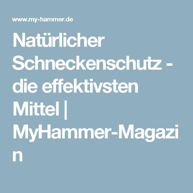 Natürlicher Schneckenschutz - die effektivsten Mittel | MyHammer-Magazin