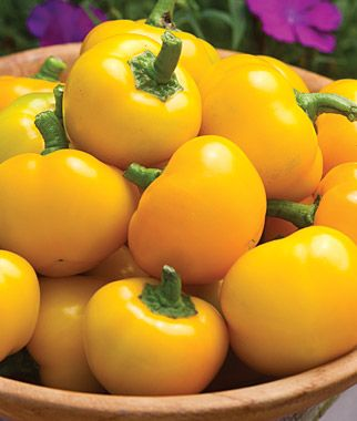 4th of july hybrid tomato