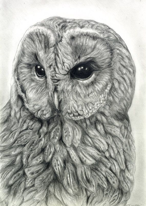 Reserved owl art original graphite drawing wildlife art bird art portrait tawny owl