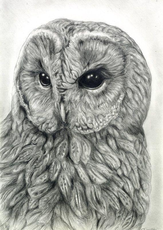 RESERVED Owl Art Original Graphite Drawing, Wildlife Art, Bird Art Portrait, Tawny Owl